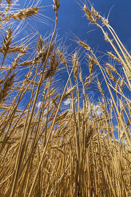 Photograph - Under The Wheat by Rob Graham