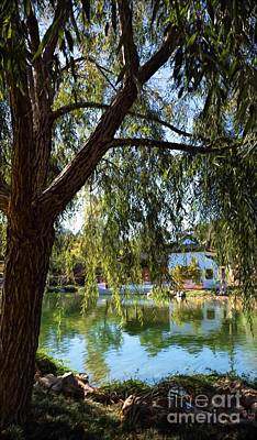 Photograph - Under The Willow Tree by Peggy Hughes