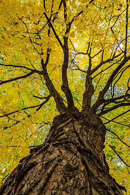 Under The Yellow Canopy Art Print by Debra Martz