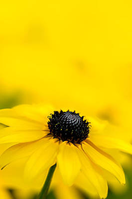 Photograph - Under The Yellow Sky by Michael Arend