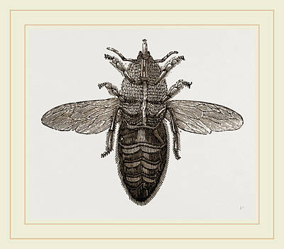Neutered Drawing - Under View Of Neuter Bee by Litz Collection