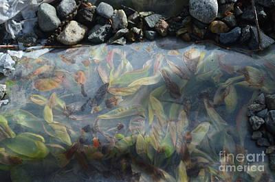 Photograph - Underground Leaf by Brian Boyle