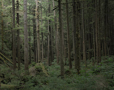 Photograph - Undergrowth by Kirt Tisdale