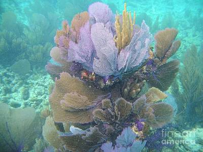 Photograph - Underwater Bouquet by Adam Jewell