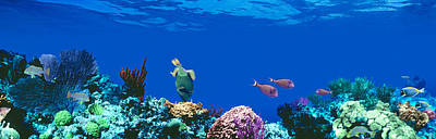 Colorful Tropical Fish Photograph - Underwater, Caribbean Sea by Panoramic Images