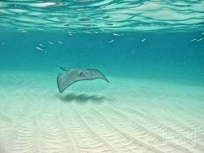 Underwater Flight Print by Peggy Hughes