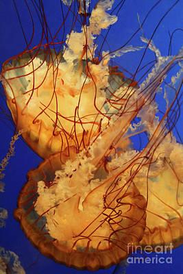 Underwater Friends - Jelly Fish By Diana Sainz Print by Diana Sainz