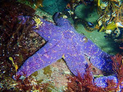 Photograph - Underwater Friends by Roxy Hurtubise