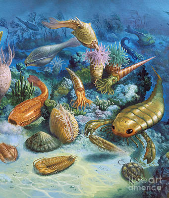 Photograph - Underwater Life During The Paleozoic by Publiphoto