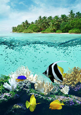 Photograph - Underwater Life In Tropical Sea by Narvikk