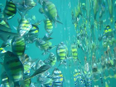 Underwater - Long Boat Tour - Phi Phi Island - 011318 Art Print
