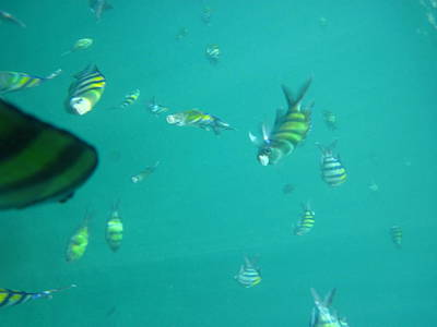 Snorkel Photograph - Underwater - Long Boat Tour - Phi Phi Island - 011319 by DC Photographer