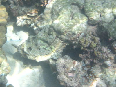 Ocean Photograph - Underwater - Long Boat Tour - Phi Phi Island - 011357 by DC Photographer