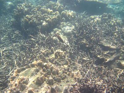 Underwater - Long Boat Tour - Phi Phi Island - 011375 Art Print