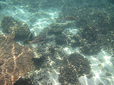 Underwater - Long Boat Tour - Phi Phi Island - 011377 Print by DC Photographer