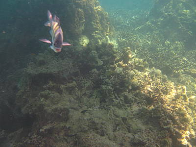 Snorkeling Photograph - Underwater - Long Boat Tour - Phi Phi Island - 011380 by DC Photographer