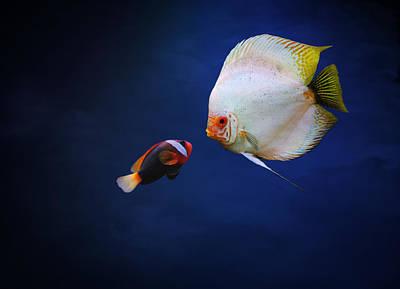 Clown Fish Photograph - Underwater Love  by Heike Hultsch