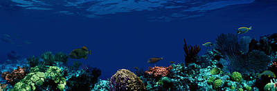 Colorful Tropical Fish Photograph - Underwater by Panoramic Images