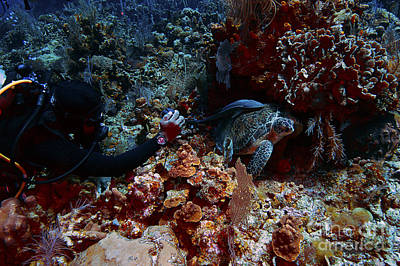 Photograph - Underwater Photographer by JT Lewis