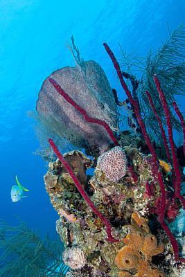 Photograph - Underwater Scene by Jean Noren