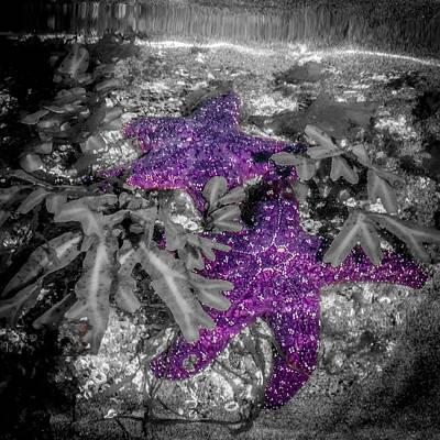 Photograph - Underwater Star by Roxy Hurtubise
