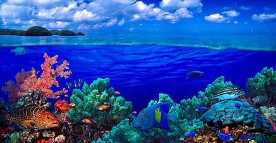 Underwater View Of Yellowbar Angelfish Art Print by Panoramic Images