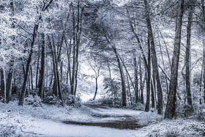 Christmas Holiday Scenery Photograph - Unexpected Snowfall by Marc Garrido