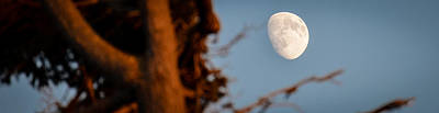 Photograph - Unfinished Moon In The Arms Of A Tree by Ronda Broatch