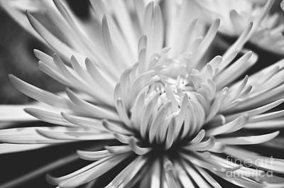 Photograph - Unfolding by Artist and Photographer Laura Wrede