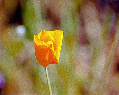 Photograph - Unfolding Poppy by William Havle