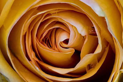 Photograph - Unfolding by Robert Woodward