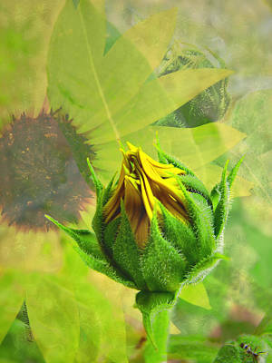 Digital Sunflower Digital Art - Unfolding Sunflower by Kae Cheatham