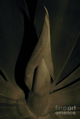 Photograph - Unfolding by Tim Good
