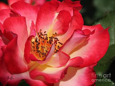 Photograph - Unforgettable by Geri Glavis