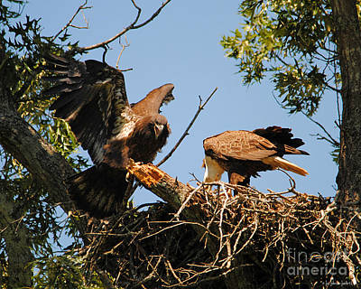 Photograph - Unhappy Eaglet by Jai Johnson