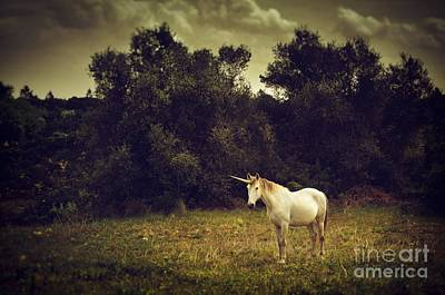Extinct And Mythical Photograph - Unicorn by Carlos Caetano