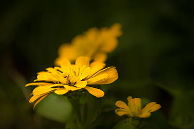 Photograph - Unidentified Yellow Flower by  Onyonet  Photo Studios