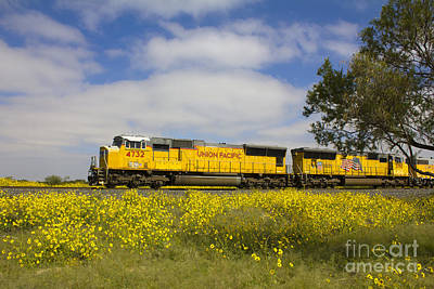 Photograph - Union Pacific Yellow No 1 by Alycia Christine