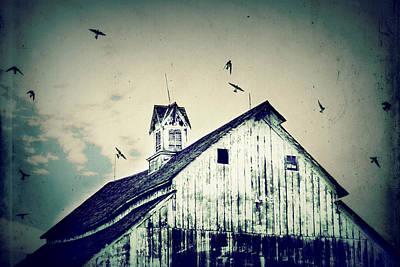 Baby Swallows Photograph - Unique Cupola by Julie Hamilton