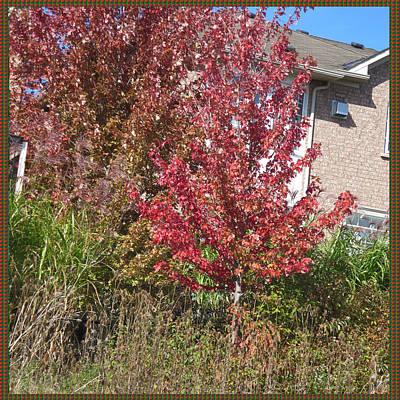 Festival Painting - Unique Fall Season Color Garden Park Neighbourhood In Oakville Ontario Canada   by Navin Joshi
