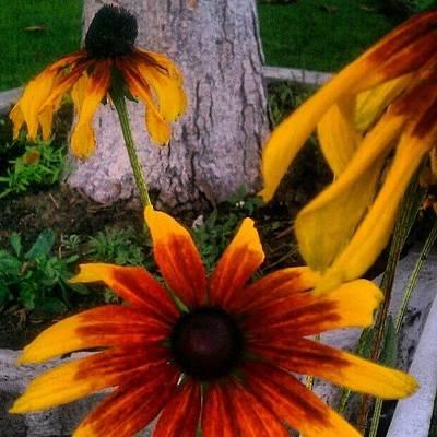 Unique Photograph - #unique Flowers by Rachel Friedman