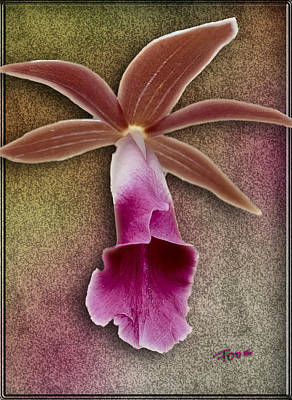 Photograph - Uniquely Orchid by Roy Foos