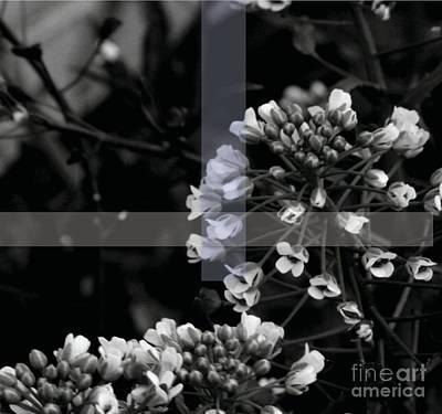 Photograph - Unity by Jamie Lynn