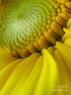 Sunflowers Photograph - Unity Photography by Tina Marie