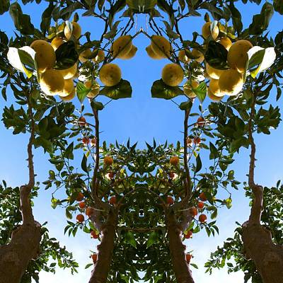 Kaleidoscopic Photograph - Unnatural 78 by Giovanni Cafagna