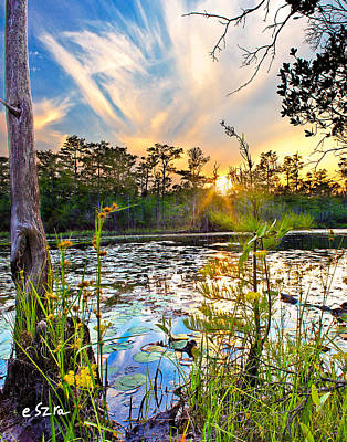 Cypress Swamp Photograph - Yellow Wild Flowers Swamp Sunset Blue Sky Reflection Art Prints by Eszra