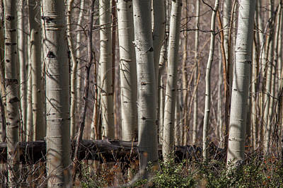 Photograph - Untitled Aspen II by Ryan Heffron