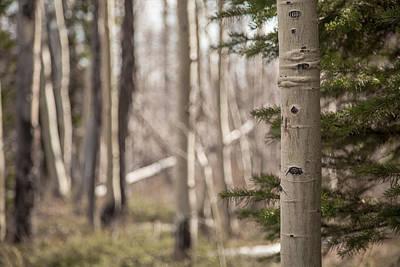 Photograph - Untitled Aspen by Ryan Heffron