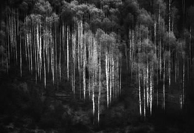 Forest Light Photograph - Untitled by Atul Chopra