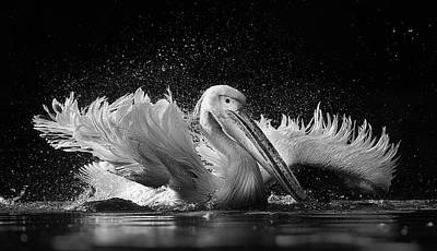 Bird Bath Photograph - Untitled by C.s. Tjandra